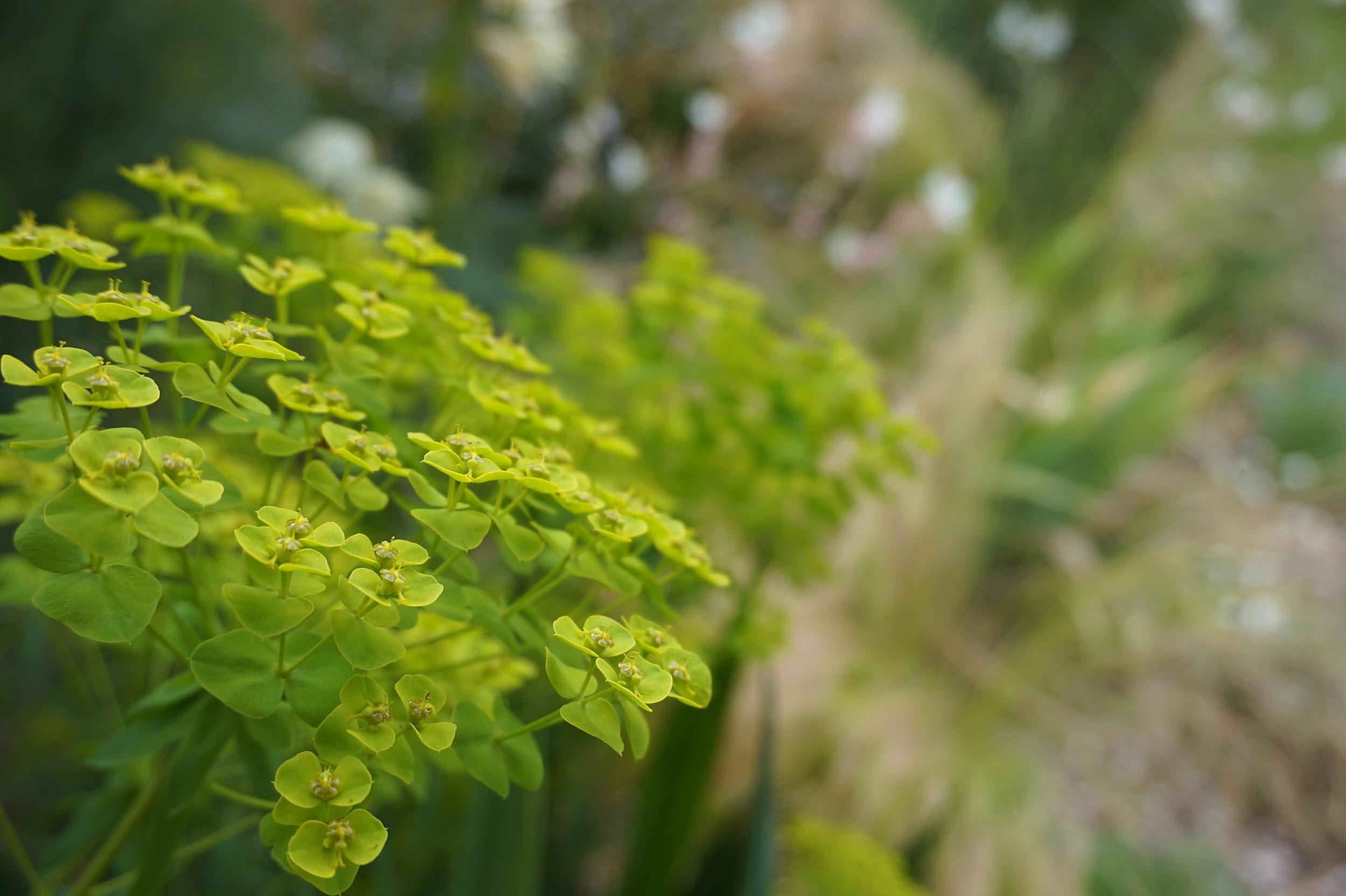 Gartenplanerin mit herz und seele pflanz konzept for Peter janke design mit pflanzen