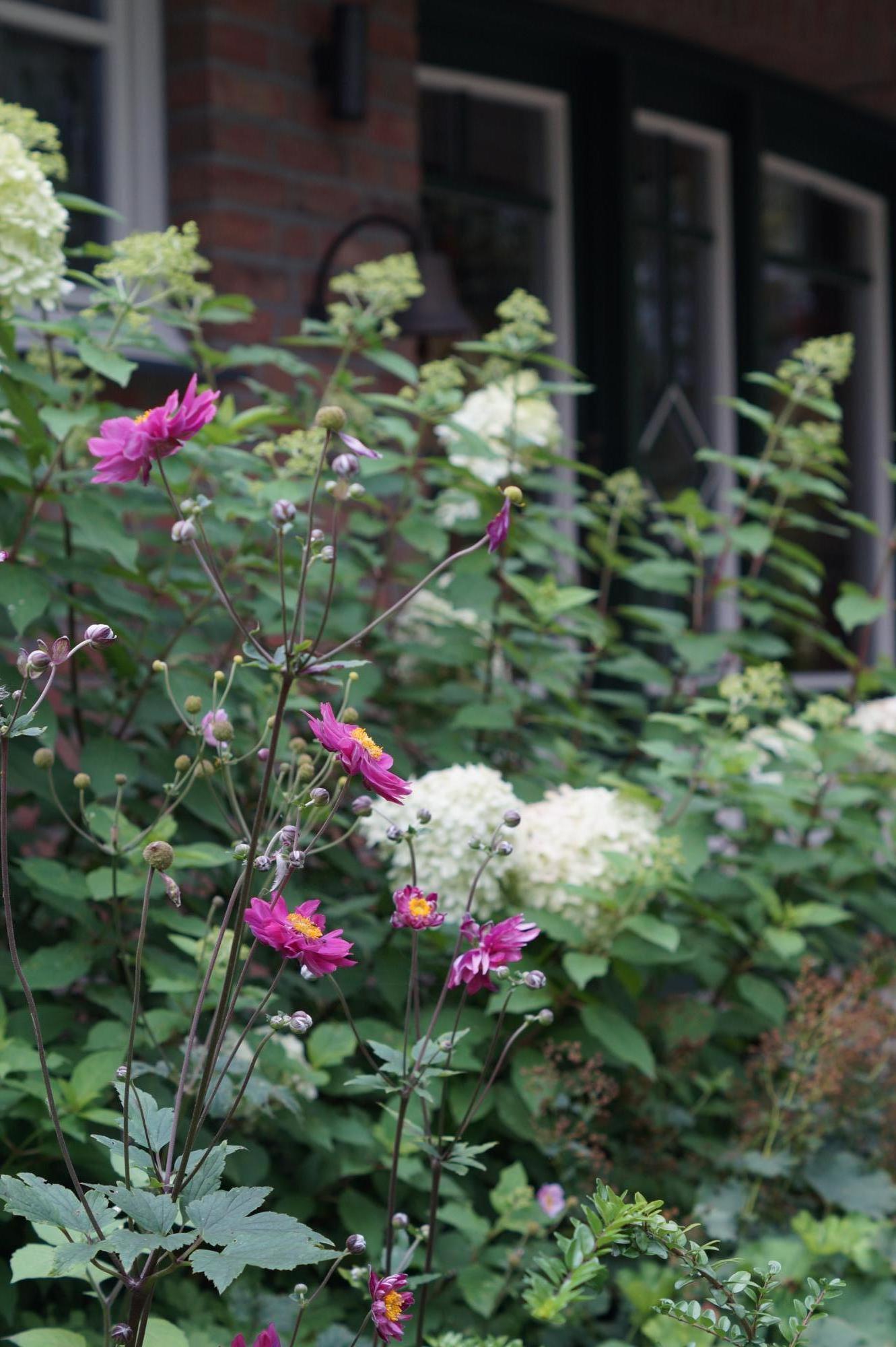 Vorgarten im Landhausstil 2 - PFLANZ-KONZEPT